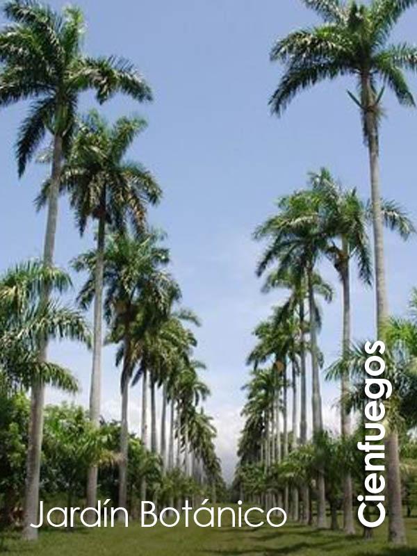 Cienfuegos - Jardin Botanico
