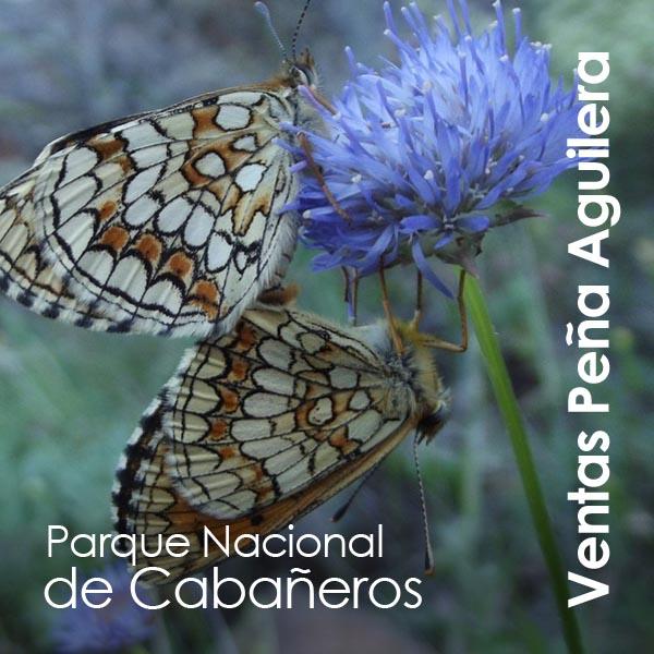 Ventas Peña Aguilera - Parque Nacional de Cabañeros (2)