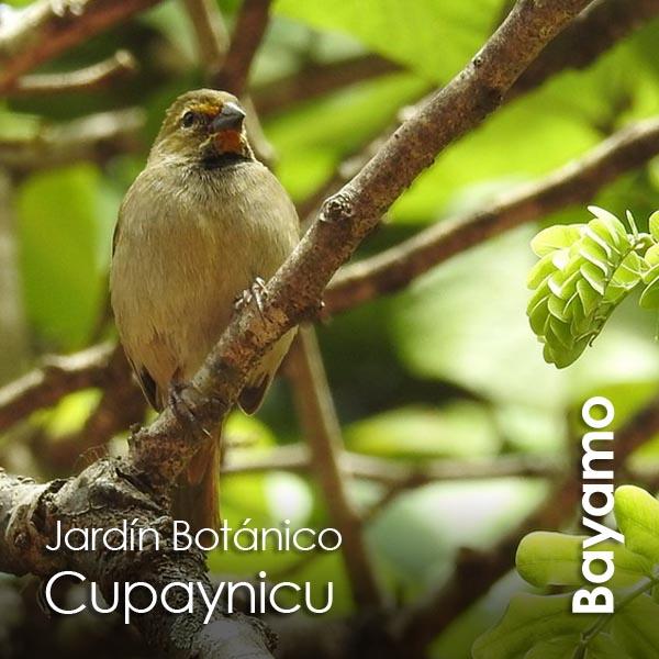 Bayamo - Jardin Botanico de Cupaynicu