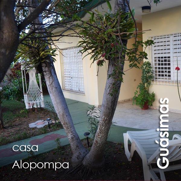 Guasimas - Alopompa