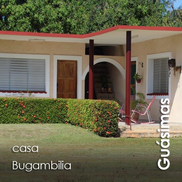 Guasimas - Bugambilia