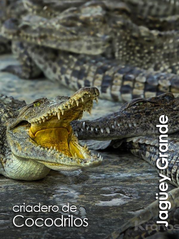Jaguey Grande - criadero de cocodrilos