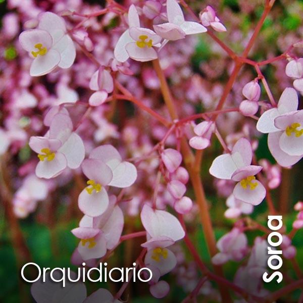 Soroa - Orquidiario
